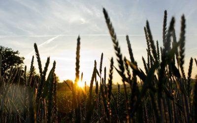 Farmer Expo in Debrecen eröffnet